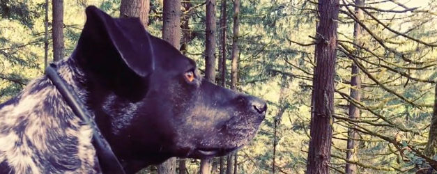 Fruition's video for Dawn goes to the dogs
